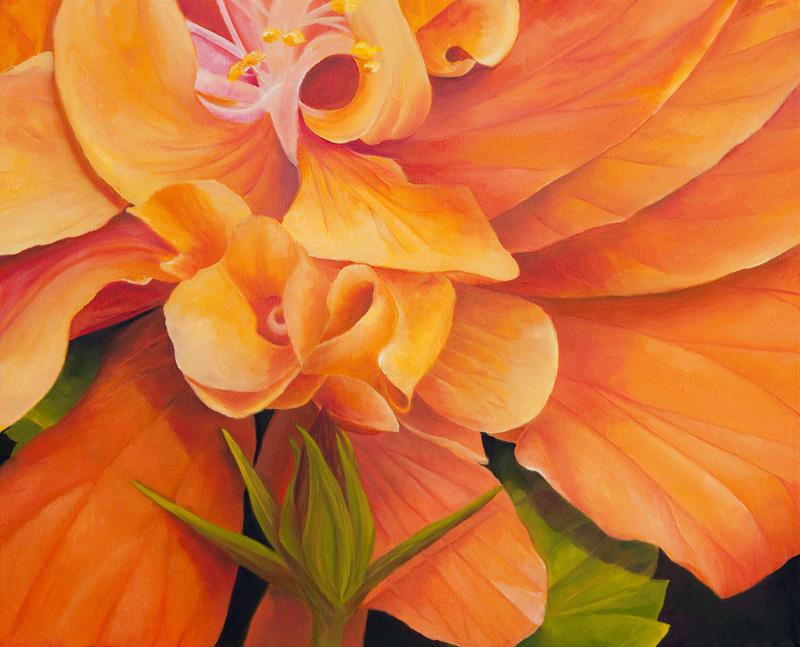 Spainter_peach hibiscus (1)
