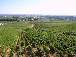 Ombiasy vineyard pic